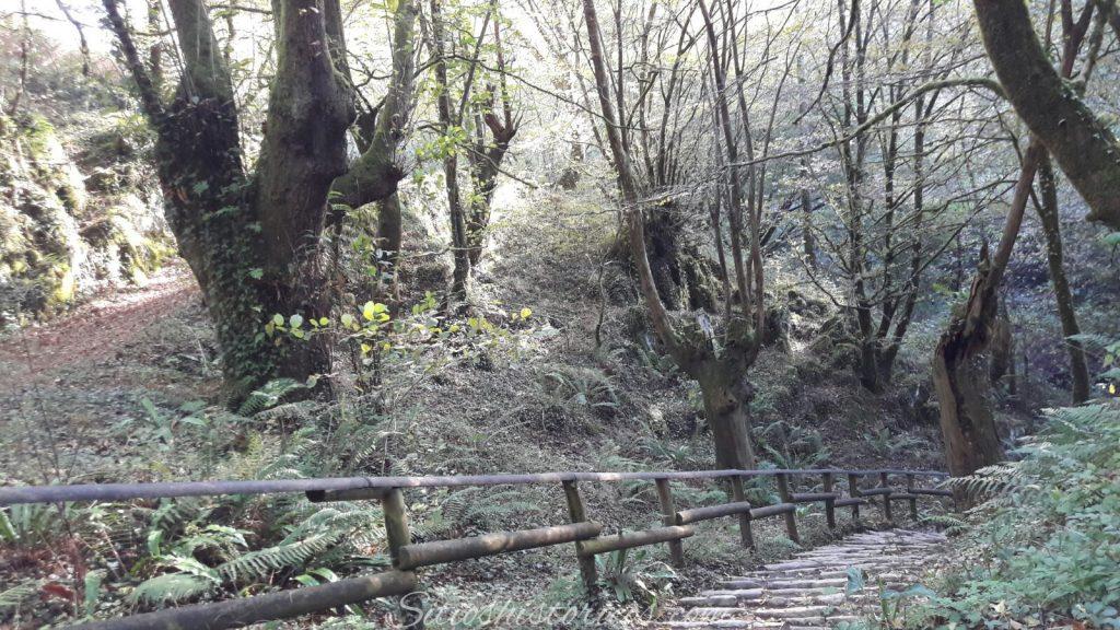 Bosques navarra