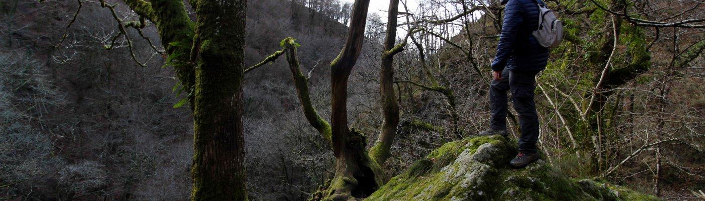 Bosque de Artikutza