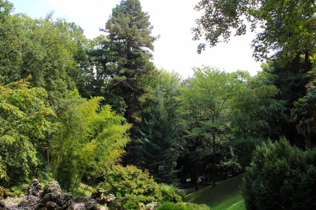 Bosque de Aiete