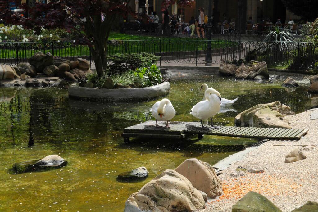 Cisnes plaza de Gipuzkoa